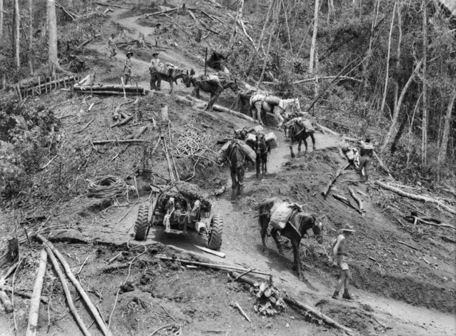 Mules and Pack Horses in Kokoda